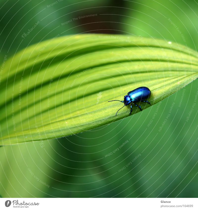 Beautiful Green Blue Plant Animal Movement Happy Contentment Glittering Small Safety Happiness Esthetic Round Near Natural