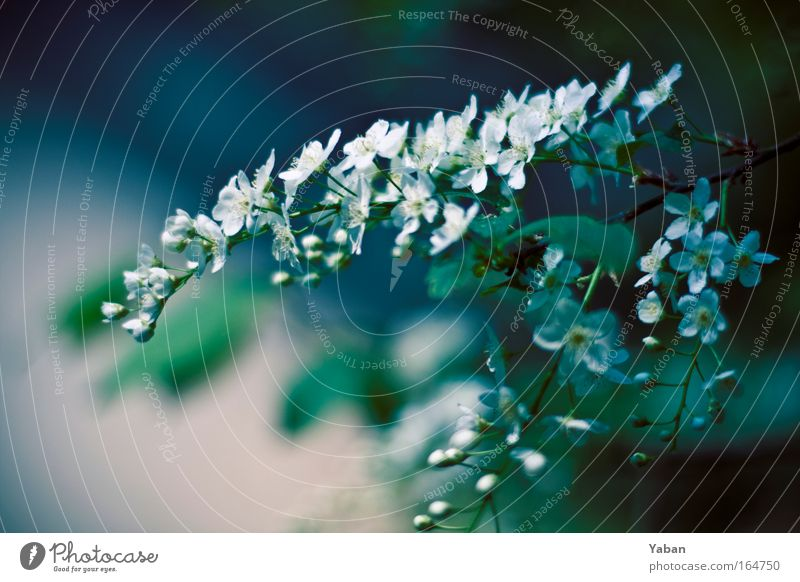 Nature White Green Beautiful Tree Plant Environment Spring Blossom Natural Growth Authentic Esthetic Transience Blossoming Fragrance
