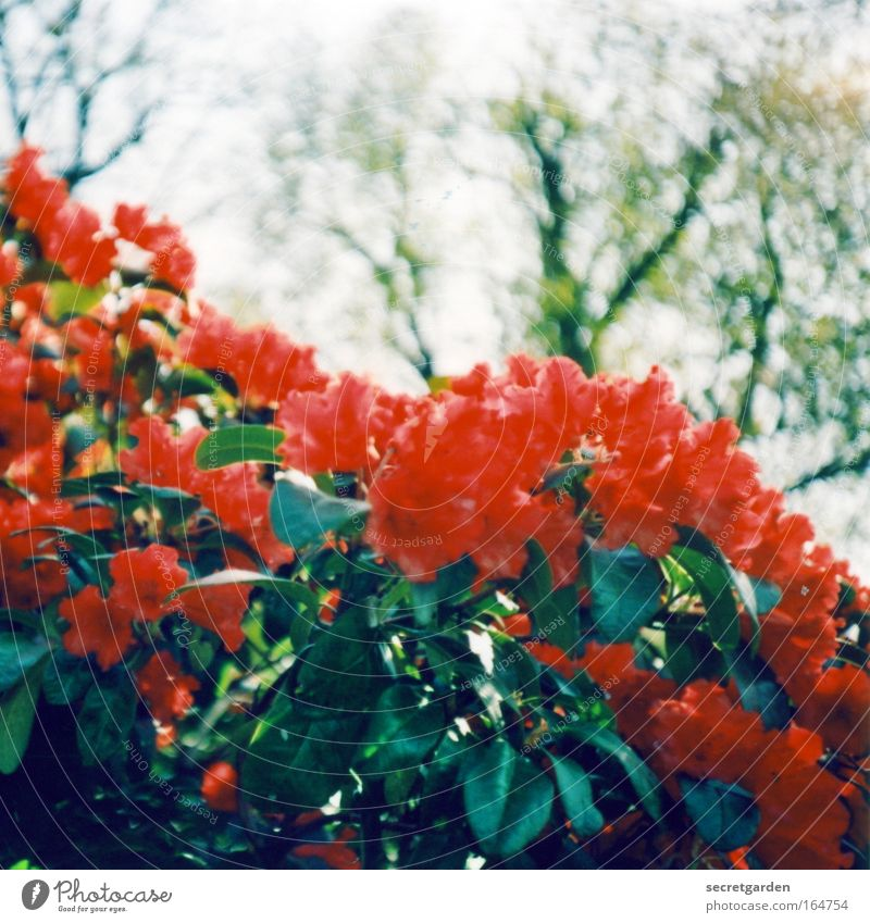 Sky Nature Tree Red Plant Summer Flower Animal Environment Spring Garden Blossom Park Illuminate Kitsch Blossoming