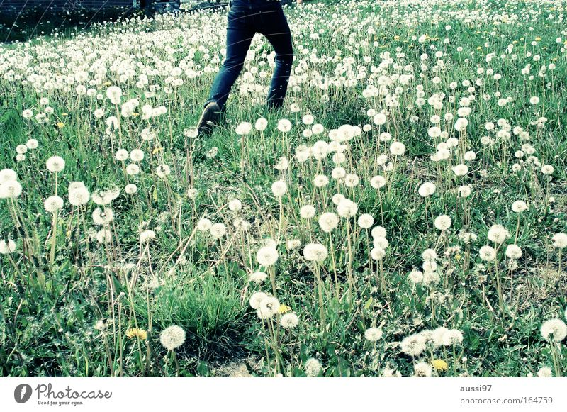 Nature Summer Vacation & Travel Meadow Walking Running Infancy Discover Dandelion Flower meadow Light heartedness Children's joy