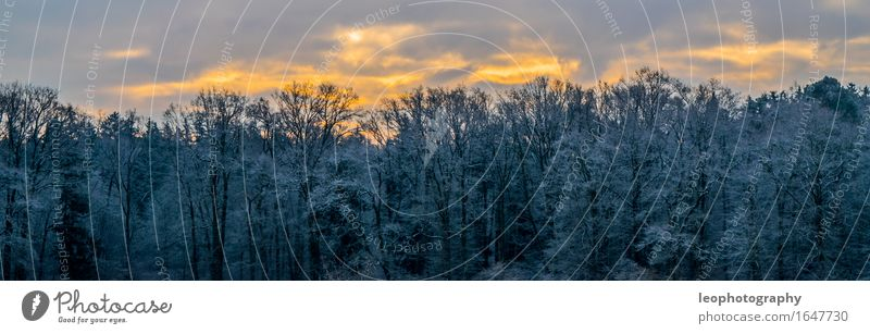 winter panorama Environment Nature Landscape Sky Clouds Sun Sunlight Winter Weather Beautiful weather Ice Frost Snow Snowfall Forest Fantastic Cold Blue