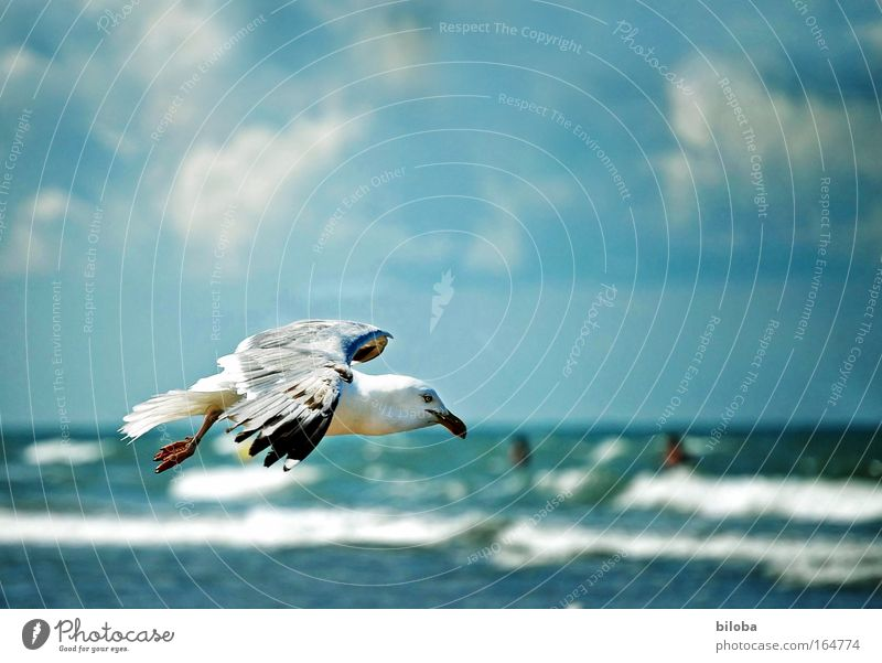 Nature Water Sky Joy Beach Animal Moody Bird Waves Coast Wind Weather Flying Free Horizon Feather