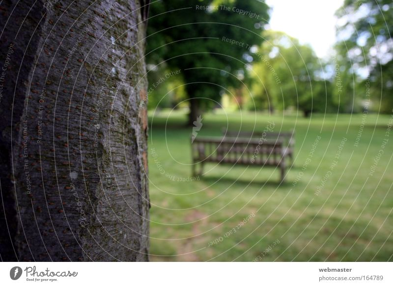 Nature Old Tree Loneliness Meadow Grass Spring Garden Park Landscape Bench Trust Pride Willpower