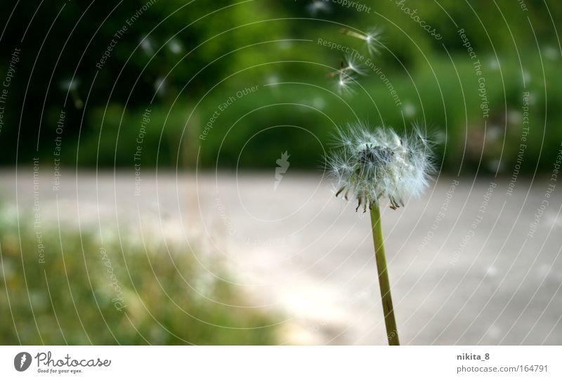 Nature White Green Plant Movement Freedom Moody Hiking Trip Esthetic Near Observe Natural Serene Dandelion Friendliness