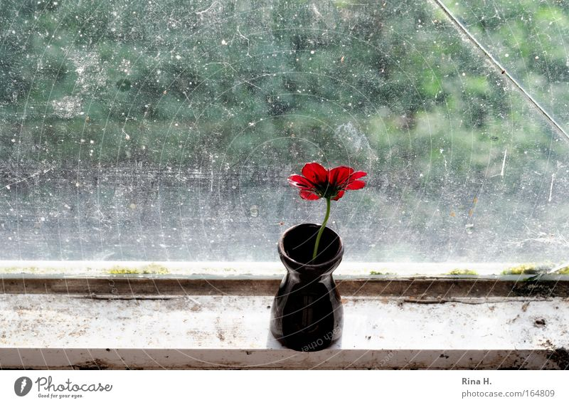Green Red Flower Loneliness Window Blossom Sadness Moody Brown Horizon Wait Hope Curiosity Longing Derelict Fragrance