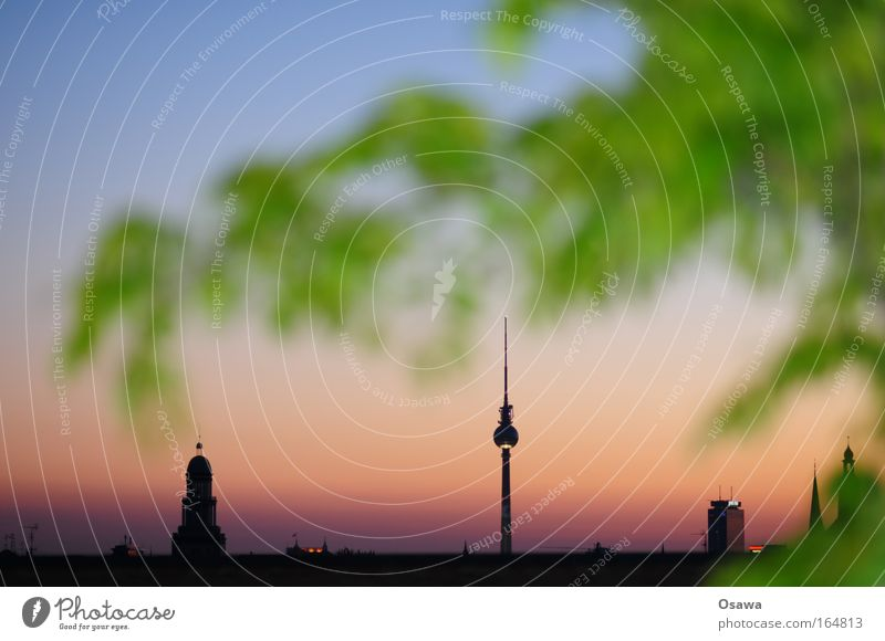 Nature Tree Green Blue City Plant Calm Leaf Black Berlin Building Architecture Germany Pink Gold High-rise