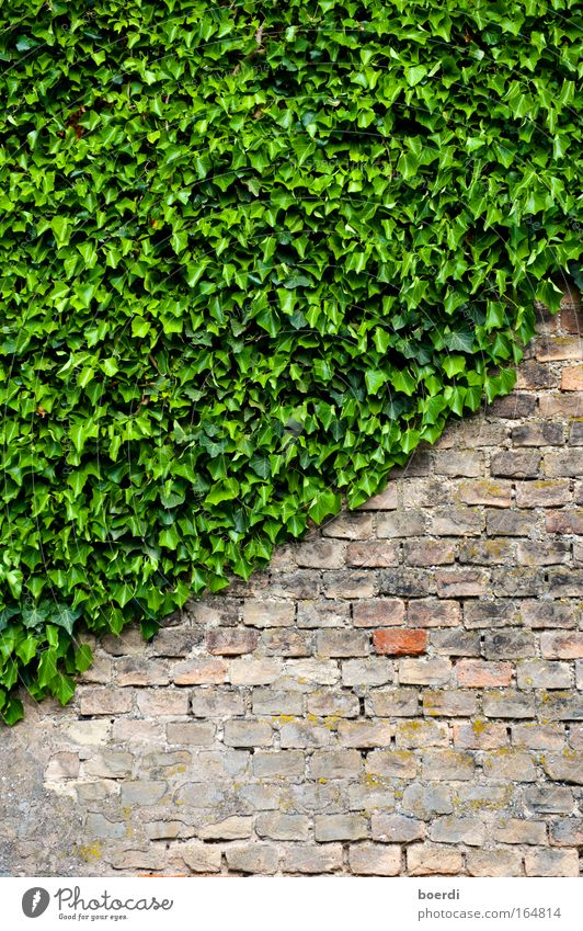 Nature Old Green Plant Leaf Wall (building) Stone Wall (barrier) Facade Growth Living or residing Transience Brick Past Backward Juicy