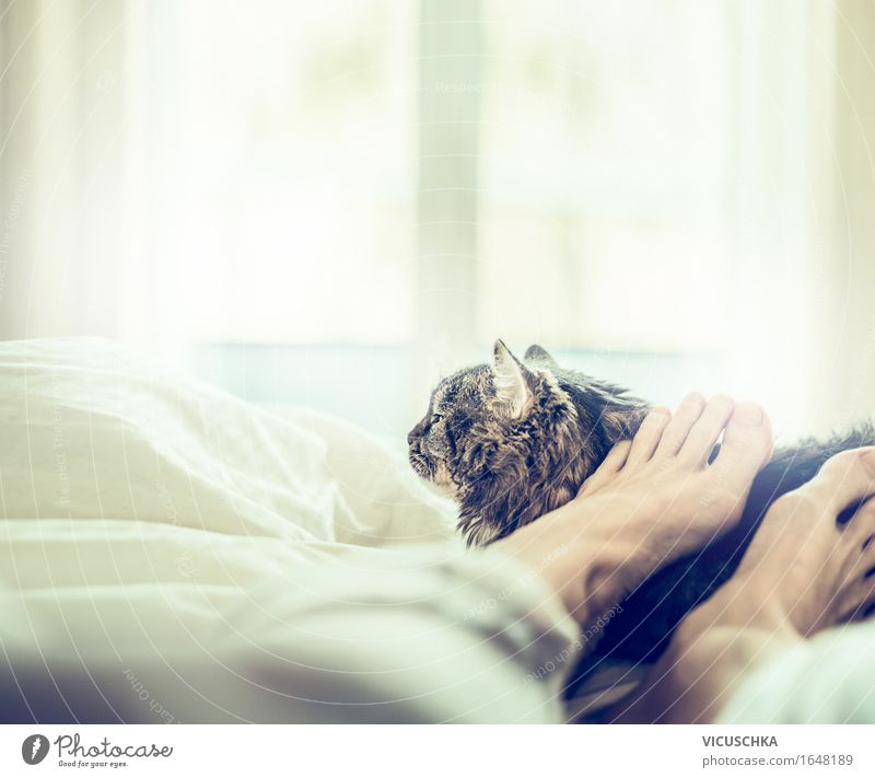 Feel good together Lifestyle Joy Summer Living or residing Bed Bedroom Human being Woman Adults Feet Pet Cat 1 Animal Love Sleep Together Relaxation Window