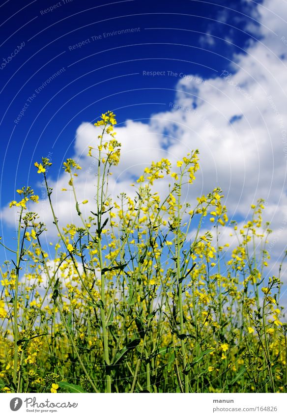 Sky Nature Plant Clouds Environment Warmth Field Food Energy industry Future Nutrition Beautiful weather Agriculture Science & Research Organic produce