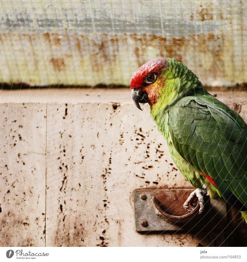 Jack Sparrow Colour photo Copy Space left Day Animal portrait Looking Wild animal Bird Wing Zoo Parrots 1 Sit Multicoloured Green Red