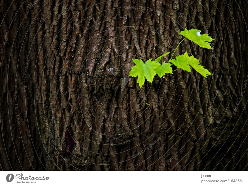 Nature Tree Green Plant Leaf Tree trunk Spring Brown Environment Success Gloomy Tree bark Rebellious Spring fever Bilious green