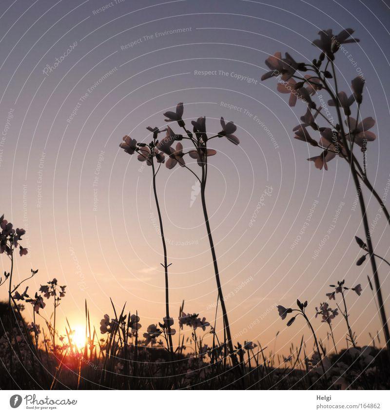 Nature Sky Sun Flower Blue Plant Calm Leaf Yellow Meadow Blossom Grass Spring Dream Landscape Esthetic