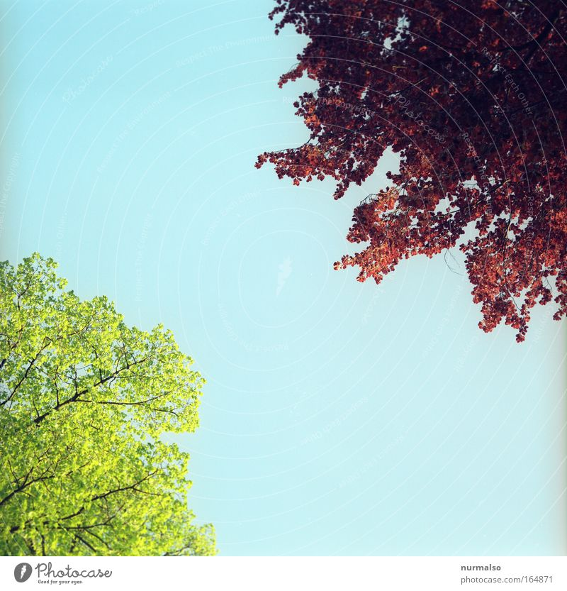 Baumerwachen Colour photo Deserted Morning Worm's-eye view Expedition Hiking Environment Nature Landscape Plant Animal Air Sky Spring Beautiful weather Tree