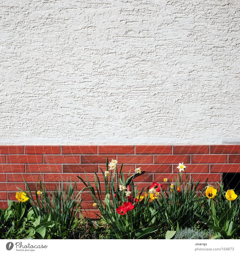 Plant Flower House (Residential Structure) Relaxation Wall (building) Spring Garden Wall (barrier) Contentment Facade Growth Living or residing Uniqueness Transience Simple Brick