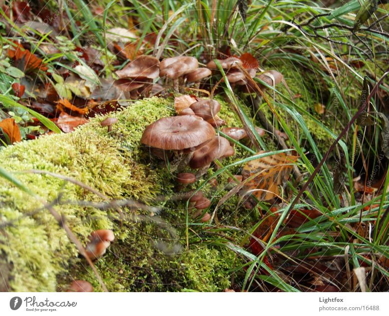 Mushrooms on trunk Eifel Tree Environment Pure Grass Hunter Collection Nature Moss