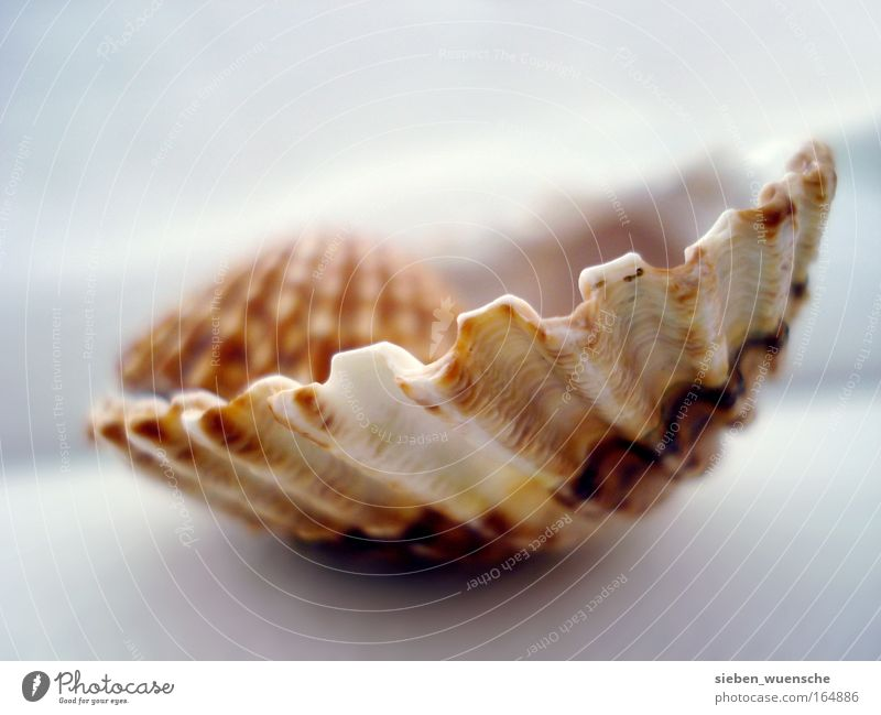 nest stool Environment Nature Mussel Mussel shell Shell-shaped Colour photo Interior shot Detail Macro (Extreme close-up) Day Deep depth of field