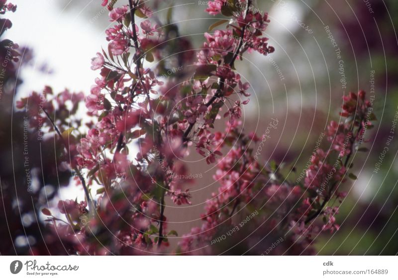 ornamental blossom Colour photo Exterior shot Deserted Morning Shadow Blur Shallow depth of field Central perspective Life Harmonious Well-being Senses