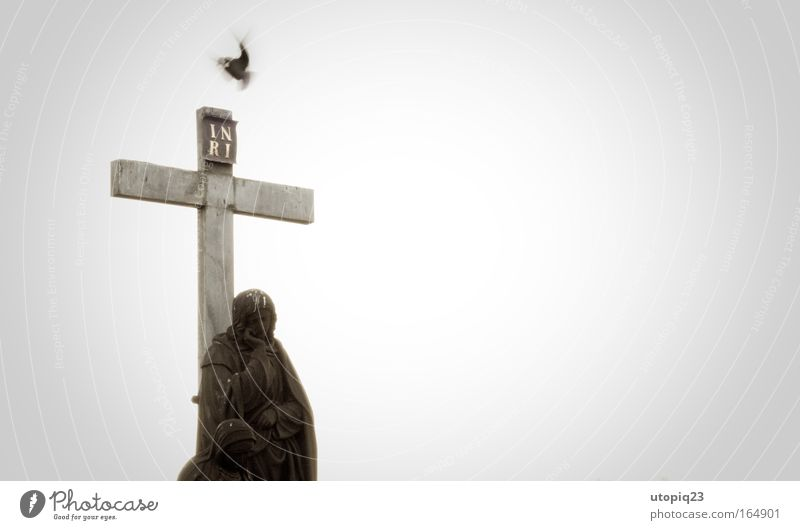 Animal Black Gray Stone Religion and faith Sadness Bird Flying Concrete Good Hope Angel Protection Sign Belief Crucifix