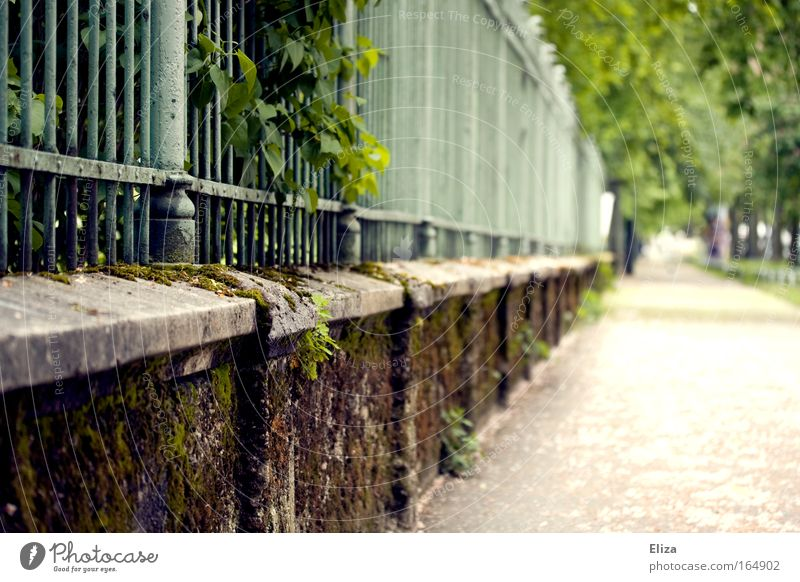 Nature Green Plant Summer Leaf Spring Wall (barrier) Lanes & trails Landscape Bushes Target Idyll Fence Moss Overgrown