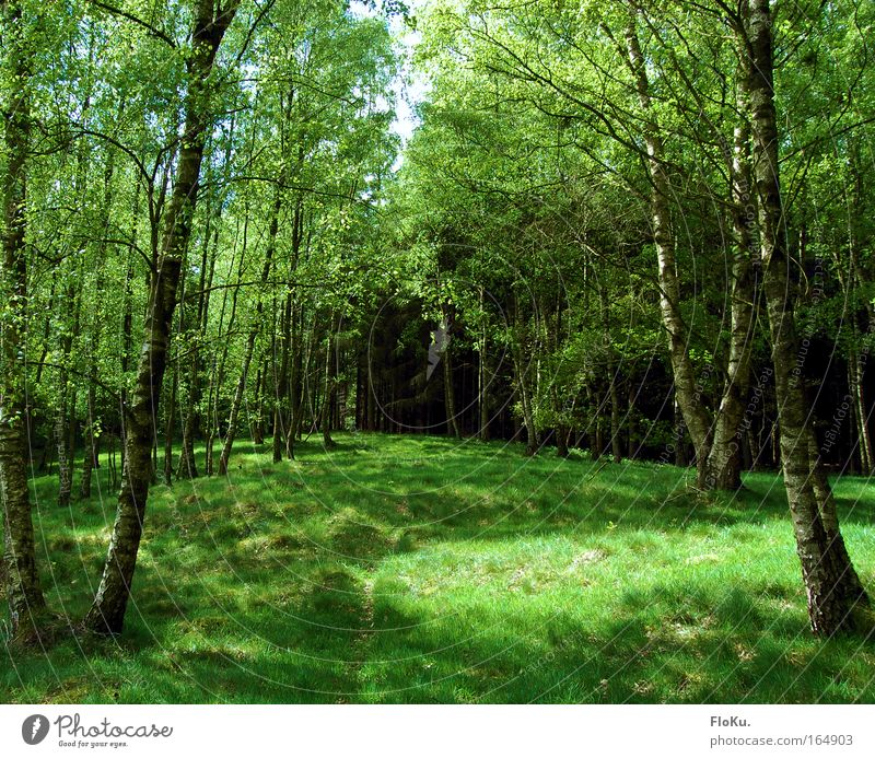 I think I'm standing in the woods Colour photo Exterior shot Deserted Day Light Shadow Sunlight Nature Plant Spring Summer Beautiful weather Tree Grass Moss