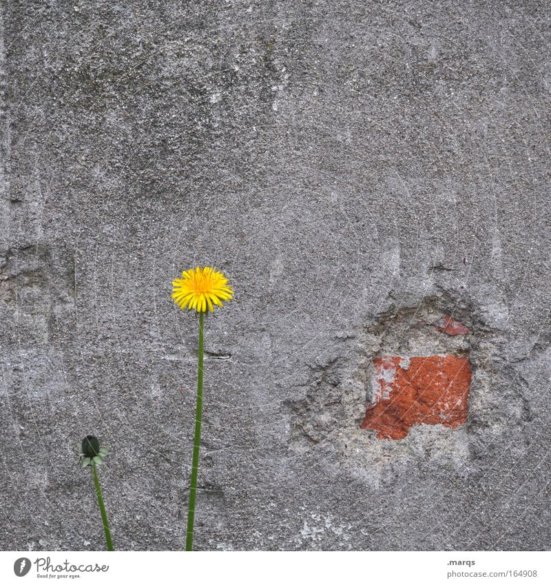 Nature Plant Flower Loneliness Environment Yellow Wall (building) Sadness Wall (barrier) Gray Park Leisure and hobbies Growth Gloomy Authentic Success