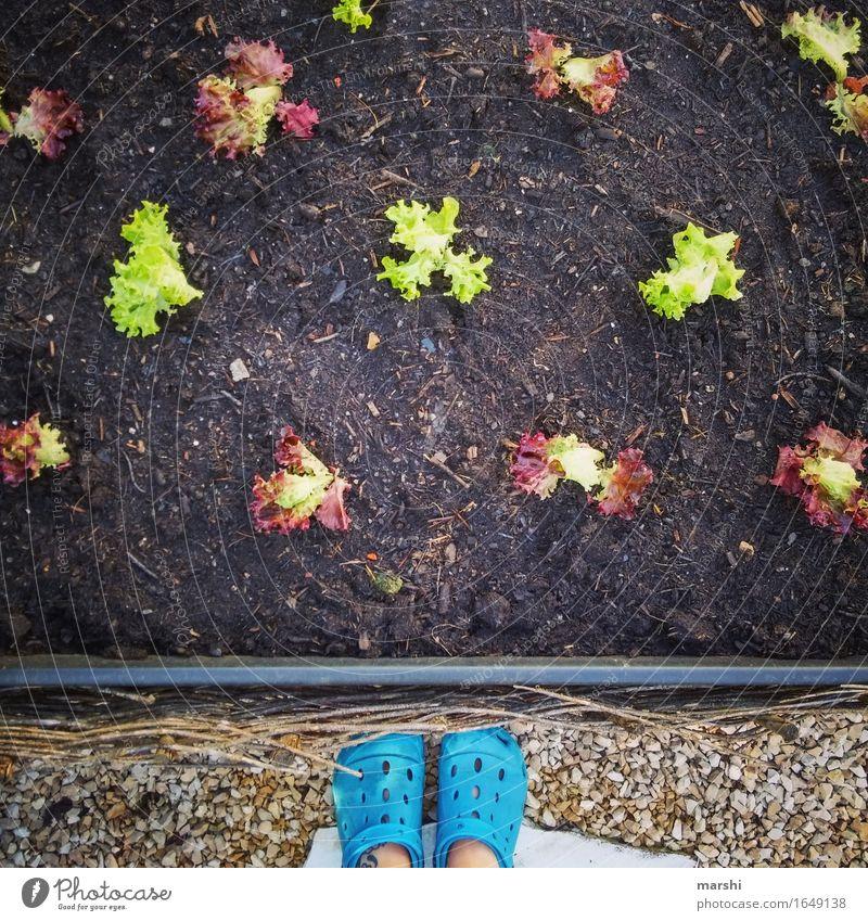 Green Garden Food Nutrition Footwear Agriculture Gardening Lettuce Sowing Gardener Domestic farming
