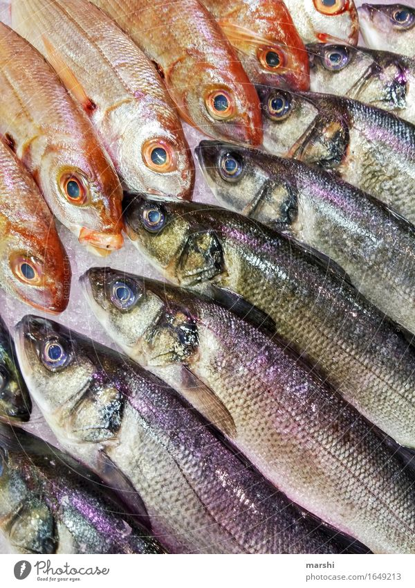 fish selection Fish Trout Markets Covered market Nutrition Healthy Eating Food photograph Portugal Fishery