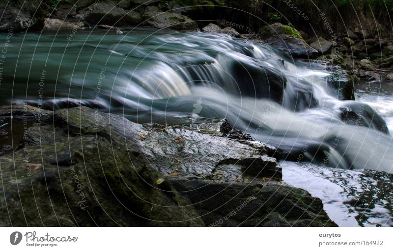 Flow! Colour photo Exterior shot Experimental Copy Space bottom Day Shadow Contrast Blur Long shot Environment Nature Landscape Plant Animal Elements Water