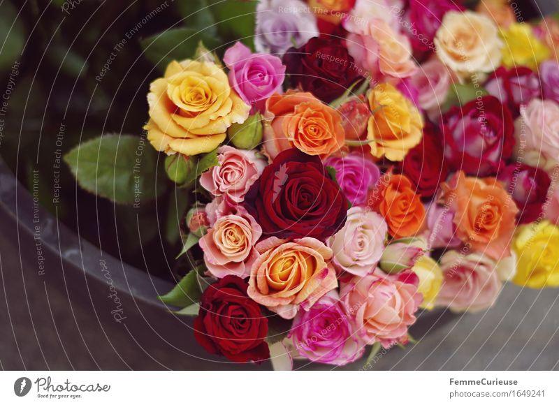 Flower bouquet. Plant Rose Transience bouquet of flowers Bouquet Rose blossom Multicoloured Flower bowl Flower shop floral greeting Love Declaration of love