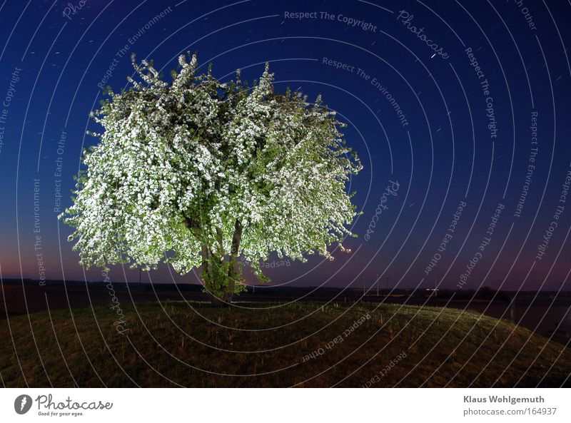 Nature Beautiful Tree Calm Emotions Blossom Spring Moody Field Stars Romance Mysterious Hill Night sky Starry sky