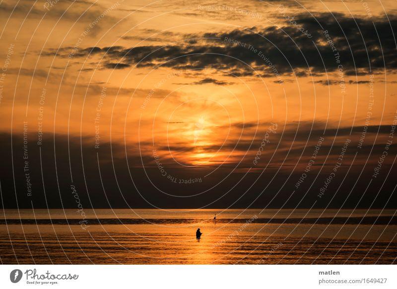 The Angler Nature Landscape Water Sky Clouds Horizon Sunrise Sunset Spring Weather Beautiful weather Bad weather Coast Beach Baltic Sea Stand Dark Brown Orange