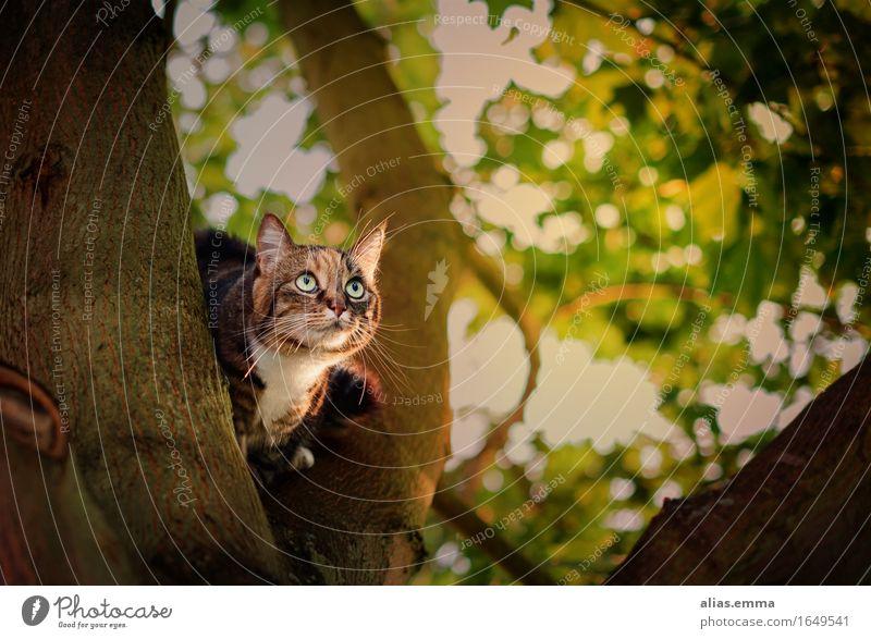 Hello?! Cat Pet Looking Tree Sit Free-roaming Domestic cat Nature Exterior shot Kitten Cute Observe Pelt Tiger Eyes Tree trunk Hunter Hunting