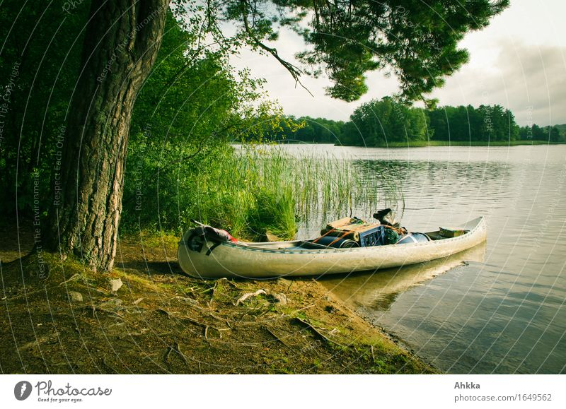 Beginning of a journey Relaxation Calm Meditation Vacation & Travel Trip Adventure Summer vacation Nature Tree Lakeside Canoe Canoe trip Contentment