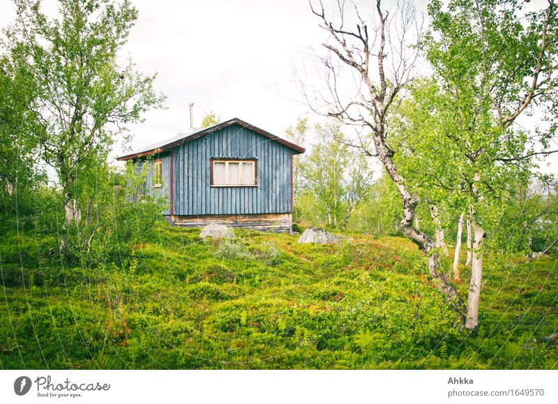 Blue hut Nature Tree Moss Hut Wooden house Green Authentic Protection Value Peaceful Scandinavia Colour photo Multicoloured Exterior shot Deserted Day
