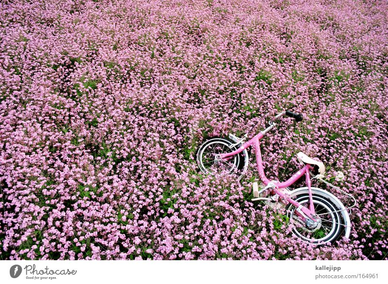 Nature Summer Plant Flower Environment Spring Metal Park Bicycle Pink Transport Fresh Happiness Friendliness Kindergarten Garden Bed (Horticulture)
