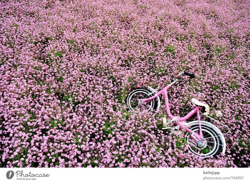Nature Summer Plant Flower Environment Spring Metal Park Bicycle Pink Transport Fresh Happiness Friendliness Kindergarten Garden Bed (Horticulture)