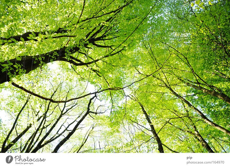 Nature Vacation & Travel Green Summer Tree Relaxation Leaf Animal Far-off places Forest Black Environment Spring Freedom Above Bright