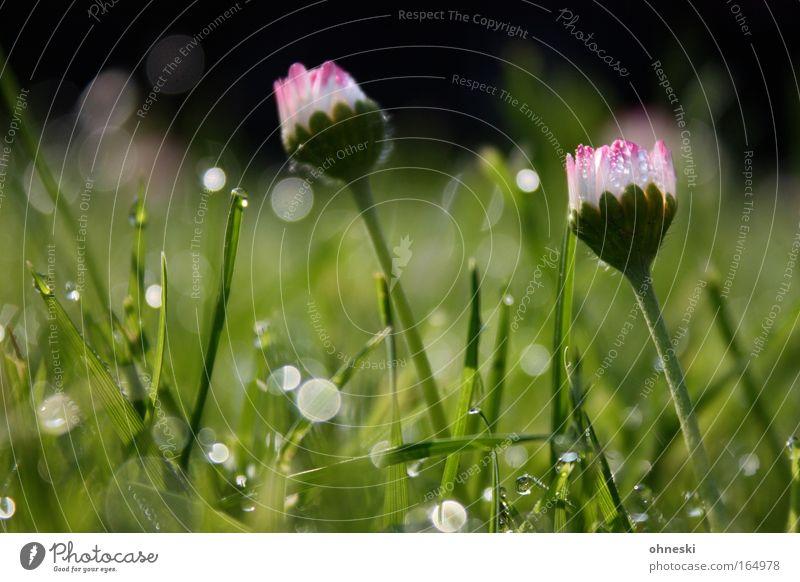 Nature Plant Green Beautiful Flower Emotions Spring Meadow Grass Glittering Contentment Earth Esthetic Joie de vivre (Vitality) Warm-heartedness Fragrance