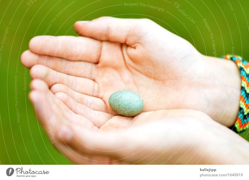 unfit to fly Hand Fingers Animal Bird Egg Bird's egg Nest Protection Stop Fragile Caution imported Nature Skin Find Colour photo Exterior shot Light Shadow