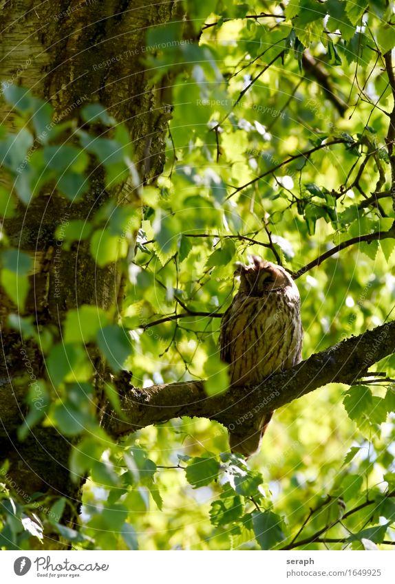 Doze Nature Tree Leaf Animal Forest Bird Wild animal Sit Feather Wing Branch Sleep Symbols and metaphors Environmental protection Treetop Wisdom