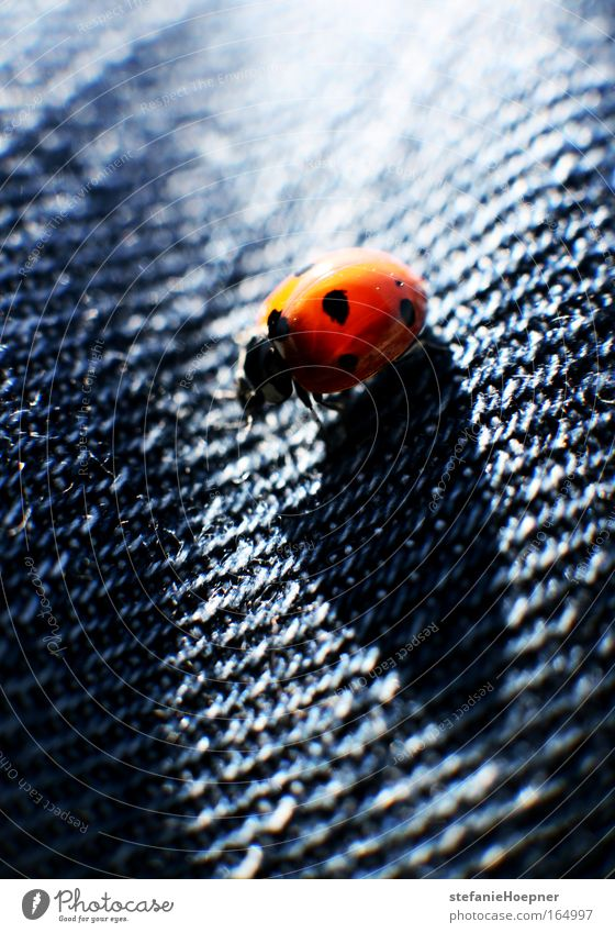 Blue Red Animal Uniqueness Denim Beetle Ladybird Cloth