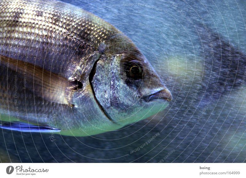 Friday fish Underwater photo Neutral Background Motion blur Fisheye Food Spanish cuisine Dive Waves Coast Reef Ocean Atlantic Ocean Wild animal 1 Animal Catch