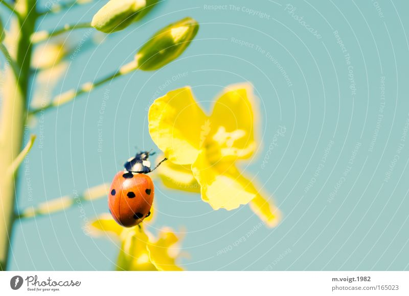 Nature Beautiful Blue Plant Red Summer Black Animal Yellow Colour Blossom Spring Environment Retro Kitsch Climbing