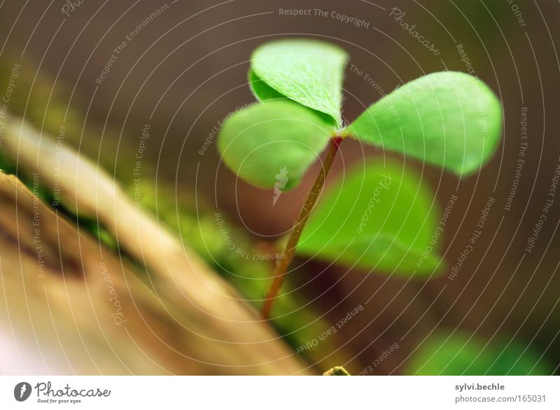 when I see this clover ... Nature Plant Growth Fresh Brown Green Spring fever Power Hope Idyll Life Wake up Occur Undo Closed Delicate Tree Tree trunk Branch