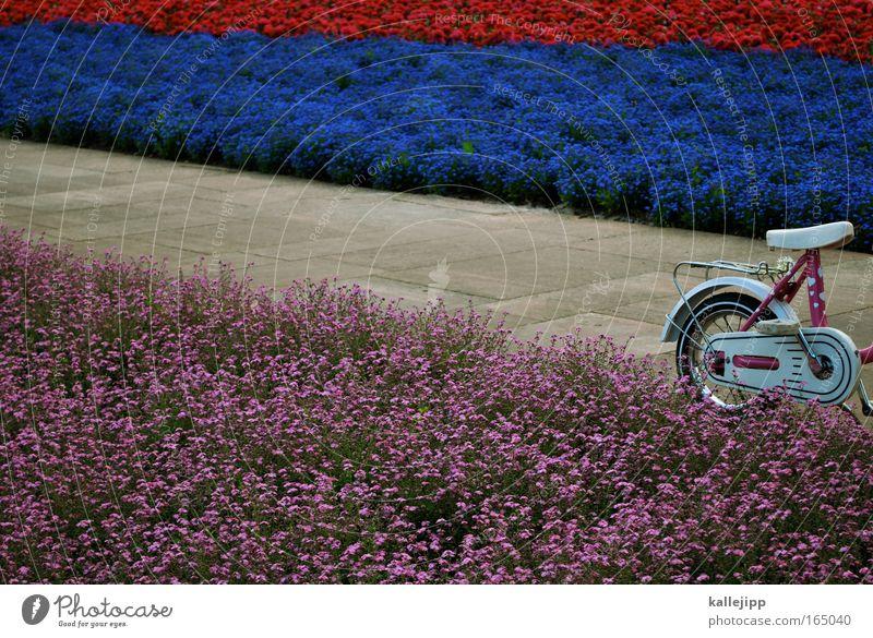 Nature Plant Summer Flower Environment Spring Garden Metal Park Infancy Bicycle Pink Transport Fresh Happiness Metalware