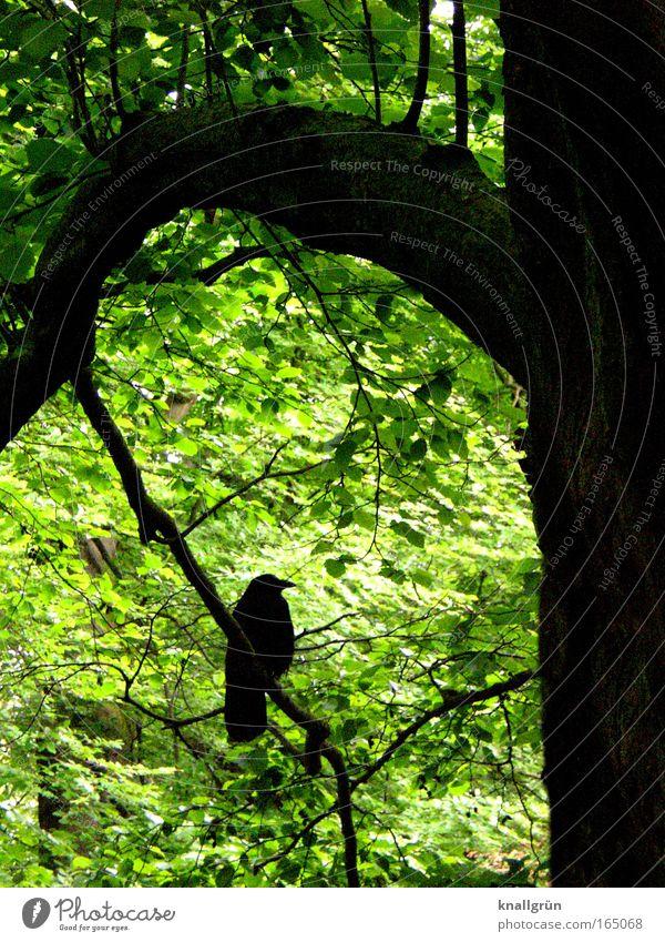 Nature Tree Green Plant Calm Black Animal Spring Brown Bird Wait Environment Sit Esthetic Serene Blossoming