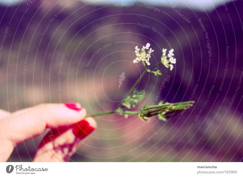 Colour photo Exterior shot Close-up Detail Structures and shapes Day Central perspective Nature Plant Beautiful weather Blossom Wild plant Mountain