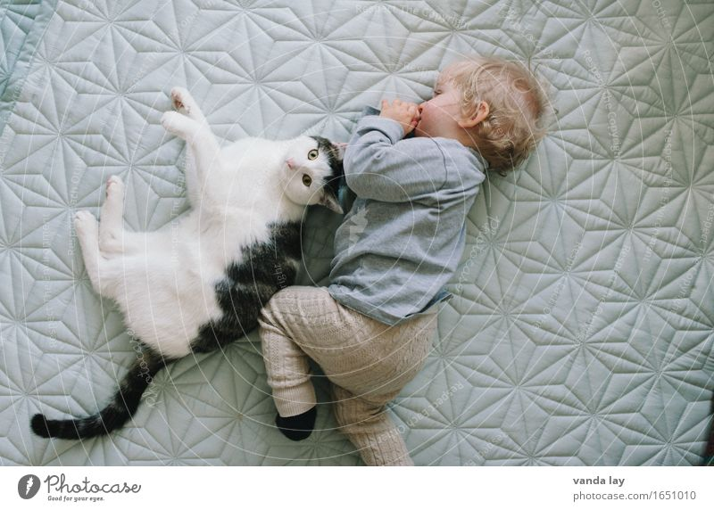 Cat Human being Child Animal Together Friendship Infancy Baby Team Trust Relationship Toddler Pet Teamwork Safety (feeling of) Symmetry