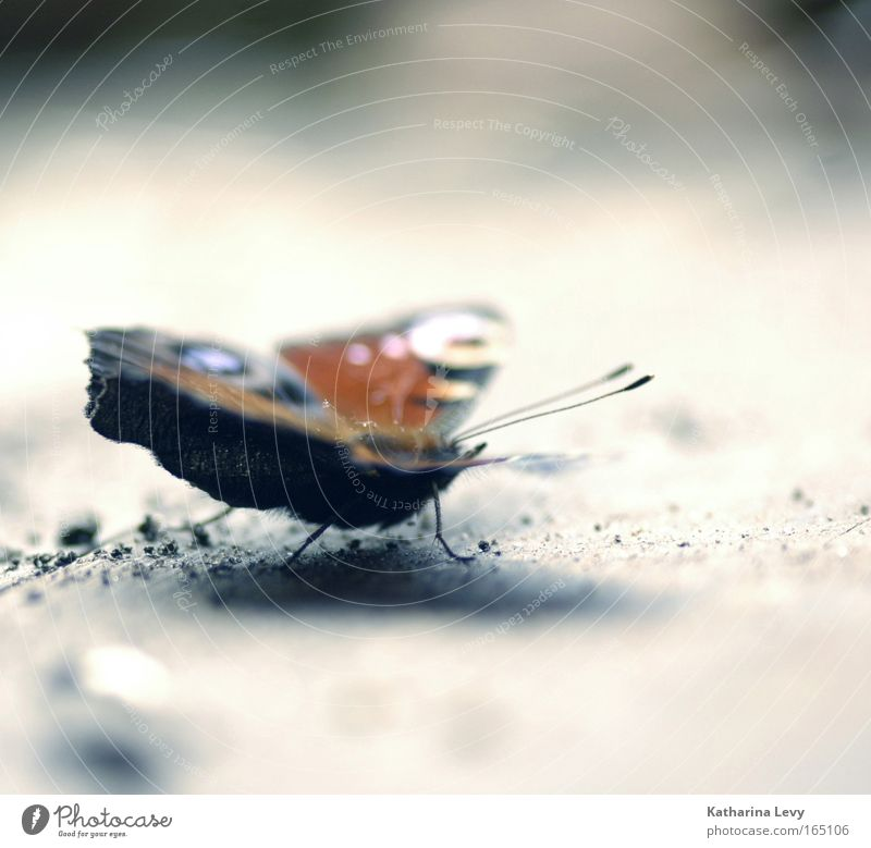 Nature Beautiful Blue Red Loneliness Animal Gray Field Pink Earth Esthetic Romance Wing Natural Butterfly Wild animal
