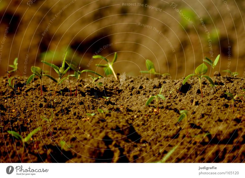 Nature Green Plant Summer Life Spring Brown Earth Field Growth Agriculture Forestry Agricultural crop